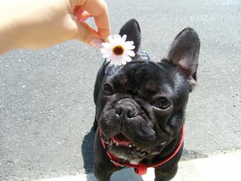 お花としげ