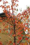 111201桜2