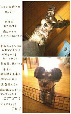 fc2blog_20120422220833b7e.jpg