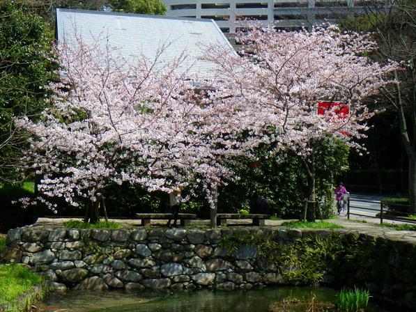 2012sakura04.jpg