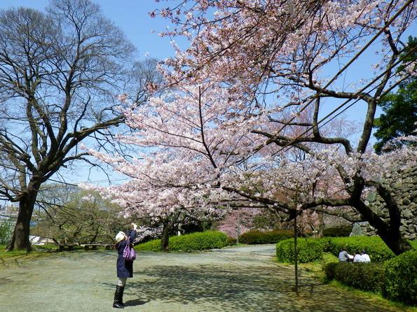 2012sakura05.jpg