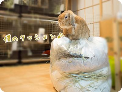 cookieblo1410185.jpg