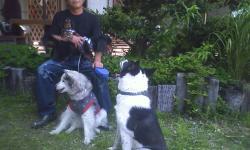 愛犬たち・・・