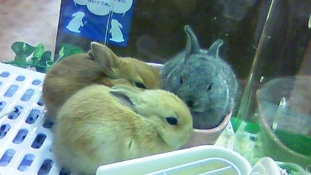 3匹ウサギ