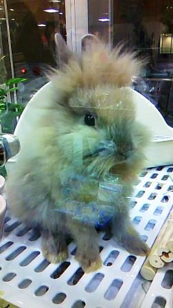 ライオンウサギ