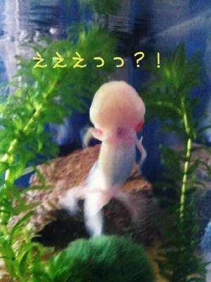 018_20110925111621.jpg