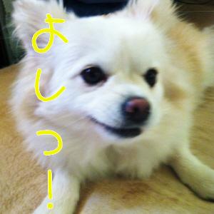 023_20130221090809.jpg