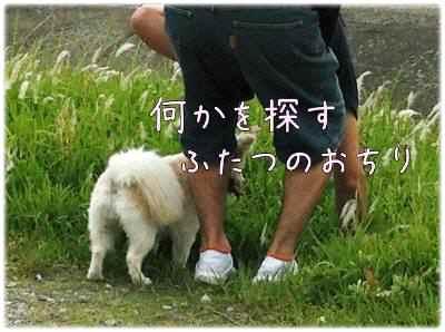028_20120614085819.jpg