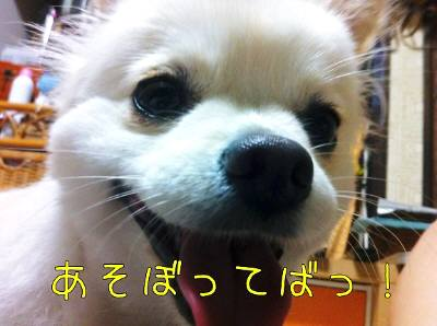 b_20110920163659.jpg