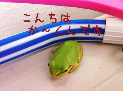 l_20110809125901.jpg