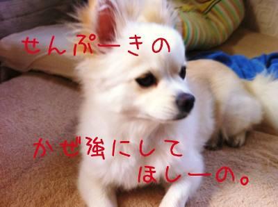 o_20110804174623.jpg