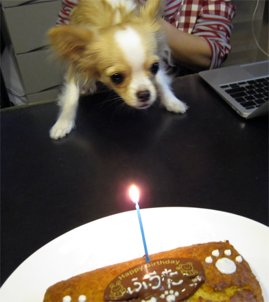 birthdaycandle2.jpg