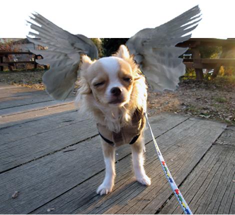 dogswing.jpg
