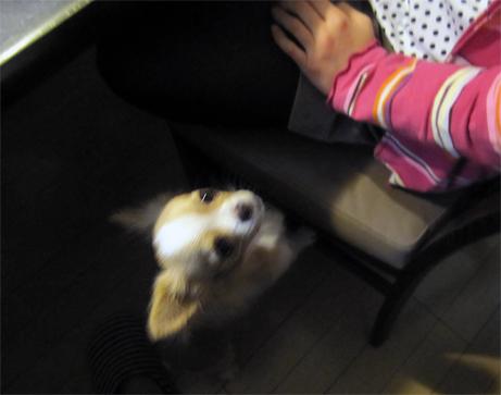 hungrydog2.jpg