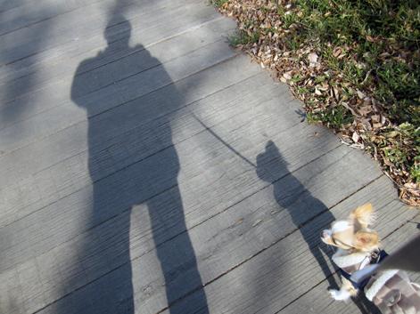 shadowalk.jpg