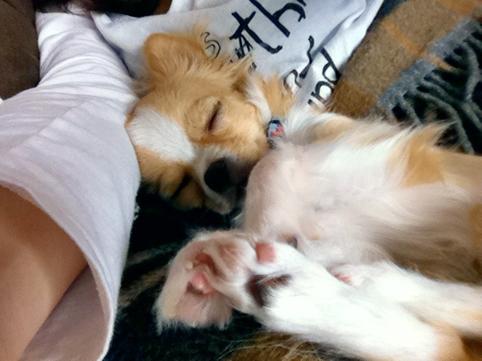 sleepingdog1.jpg