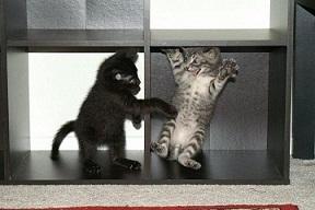 play_kittens.jpg