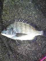 kurodai08152008-2