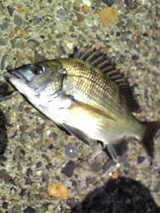 チンタ08192007