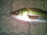 fukko09162006