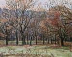 冬枯れの林
