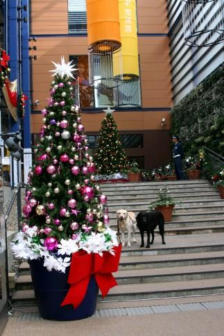 新風館クリスマス