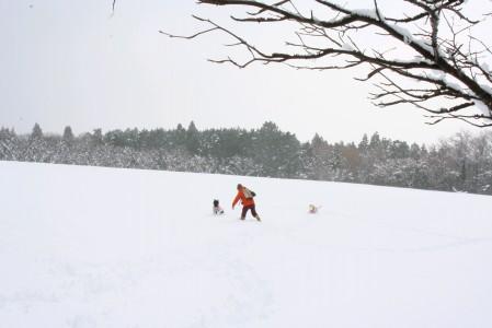 わーい!雪!!!