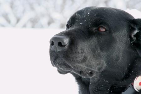 イオナ、雪、、思い出した?