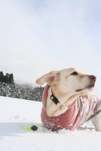また雪の季節だよ、セナ