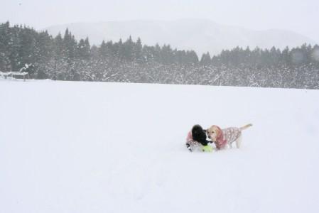 この冬もいっぱい遊ぼうね。。。