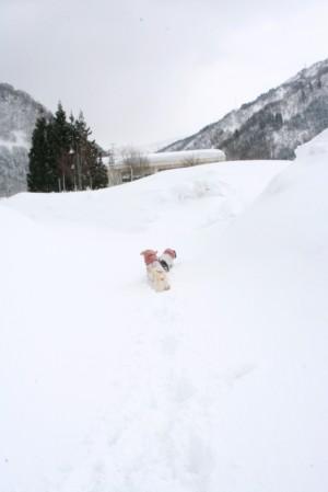 雪あそびsena*iona