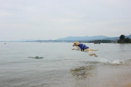 飛び込み~♪