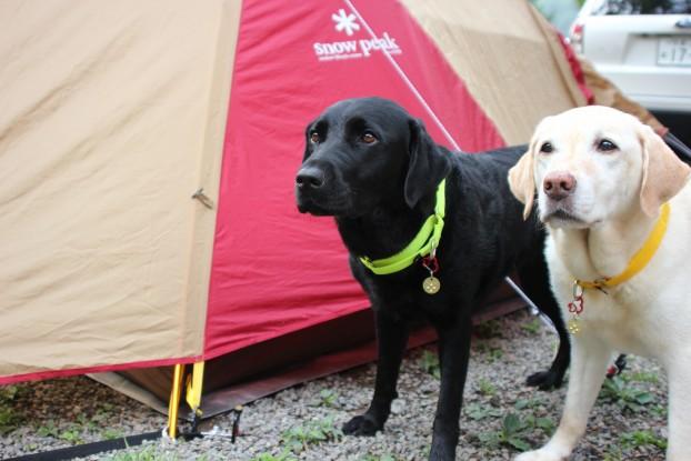 2012夏キャンプ!