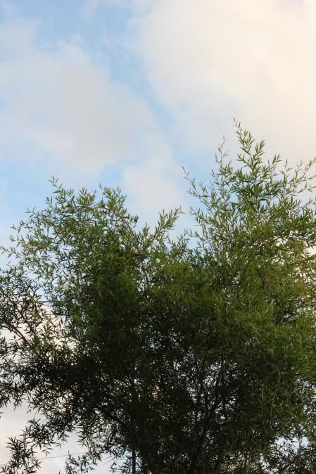 20120822a.jpg