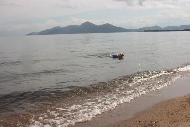 朝から泳ぐ~♪