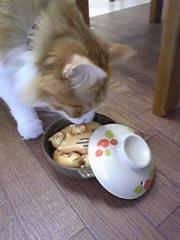 猫鍋パズル4