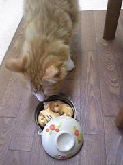 猫鍋パズル3