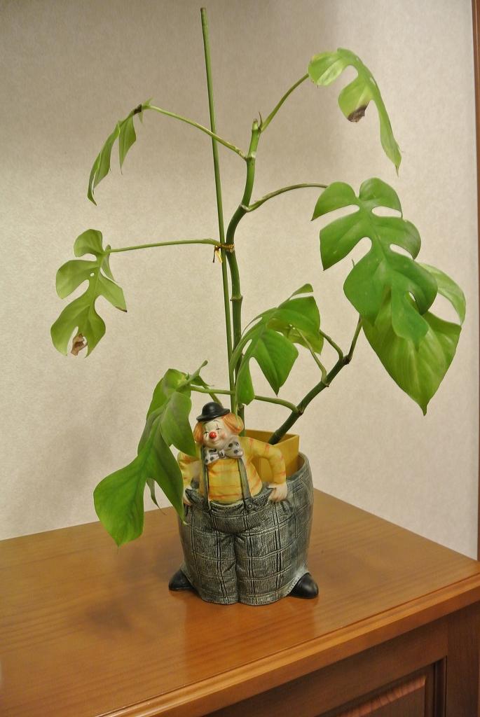 ピエロの植木鉢