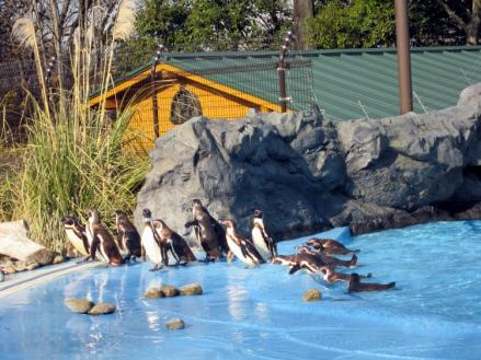 penguin1202_1.jpg