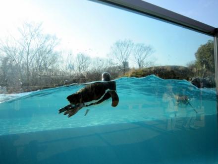 penguin1202_3.jpg