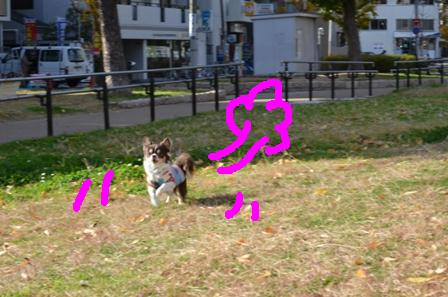 DSC_2421.jpg