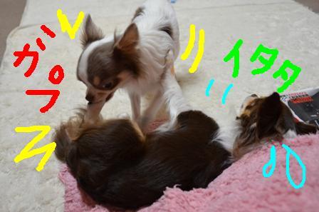 DSC_2480.jpg