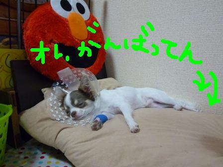P1020399_20100805215607.jpg