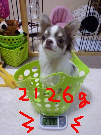 P1030244.jpg