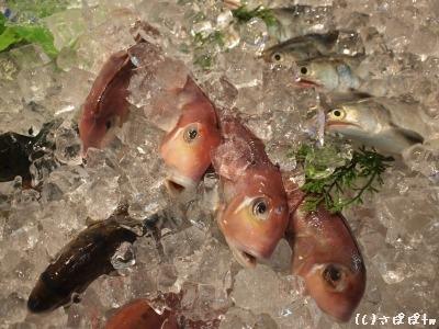 馬林漁10