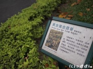 ニニ八和平公園21