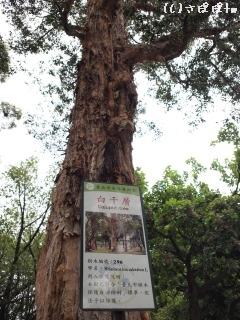 ニニ八和平公園22