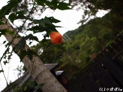 平渓の旅12