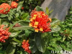 xinsheng4.jpg