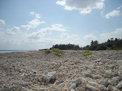 勝連の海岸03